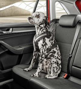Фото Ремень безопасности для собаки, L 000019409C
