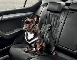 Фото Ремень безопасности для собаки, S 000019409A