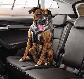 Фото Ремень безопасности для собаки, M 000019409B